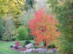 The Skillful Bee: Favorite Garden Trees and Shrubs Zone 5-6
