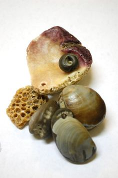 You could make something really pretty with these. old and new, six natural drilled shells and fossils. $18.00, via Etsy.