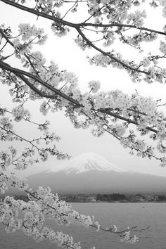 Even the noir version of japan still soft, beautiful and breathtaking ♥