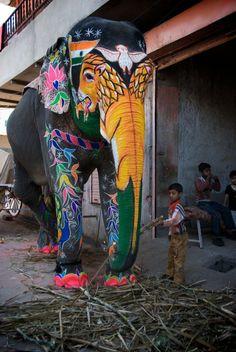 Elephant Festival in Jaipur, India. Click to shop Matthew Williamson beachwear.