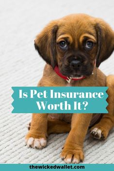 Are you considering purchasing pet insurance? Read this article first to see if … - Pet Insurance Cushing Disease, Real Estate Rentals, Cheap Pets, Investment Tips, Puppy Party, Pet Insurance, Dog Hacks, Early Retirement, Life Is An Adventure