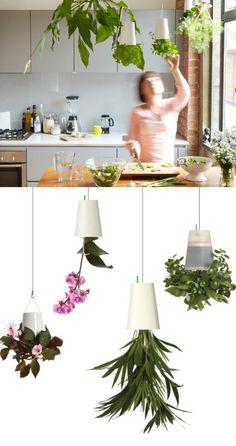 Boskke and Plumen: together in 'Hanging Vegetable Garden' at CDW 2013 #plants #garden #kitchen