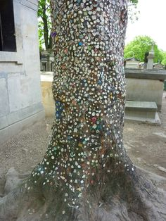 Near Jim Morrison's grave in the Père Lachaise Cemetery in Paris fans have stuck chewing gum to a tree as a colourful tribute to the singer who died in 1971.