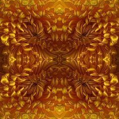 #Blumen #Schnittblumen #Chrysanthemen #gelb #Symmetrie und #Wiederholung führt zu #starken #Mustern