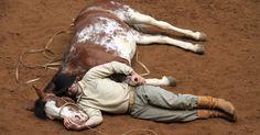 Parque gaúcho recupera animais de raça crioula usados na lida campeira