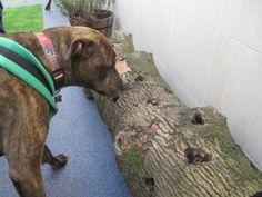Sensory garden- treats in log