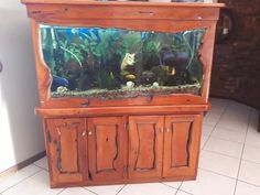 Find Fish in Port Elizabeth! Search Gumtree Free Classified Ads for Fish and more in Port Elizabeth. Port Elizabeth, Fish Tank, Fresh Water, Aquarium, Exotic, Colours, Furniture, Goldfish Bowl, Fishbowl