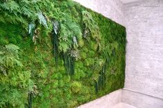 Indoor Moss and Fern Garden Wall with Whitewashed Brick Walls and Skylights in Contemporary Manhattan Meditation Studio
