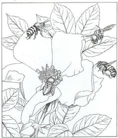 Coloring Page Nature Around The House Kids N Fun