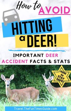 Wondering how to avoid hitting a deer (or other wildlife) when you're driving -- especially on curvy roads and at night? Follow these expert tips to avoid hitting a deer with your car! Deer collision