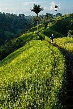 Ubud in the morning - Bekijk onze tips voor een natuurvakantie op Bali http://www.naturescanner.nl/azie/indonesie/bali-reis