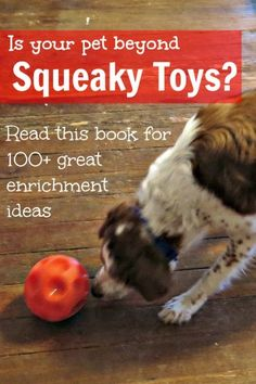 Beyond Squeaky Toys is a great little book that is all about enrichment and how…