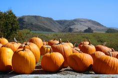 10 Ways To Enjoy Pumpkin Butter This Fall