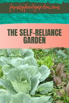 To further your frugal efforts in reducing your produce costs by growing high cost vegetables, Family Food Garden is ready to help you take you to the next level by planning and designing a large self-reliance garden. We include valuable information that gives you parameters that spell out what you need like seed maintenance, climate and watering factors. Download our checklist of supplies for a thriving garden. Learn more… #selfreliancegarden #homegrowncrops #designgardencrops Healthy Fruits And Vegetables, Growing Vegetables, Self Reliance, Food Security, Sustainable Living, Garden Planning, Vegetable Garden, Garden Landscaping, Family Meals