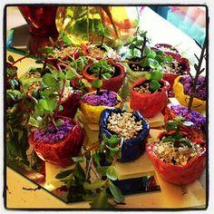 "Clay plant pots ("",)"