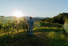 Towards the end of another intense, but always exciting, #harvest. #Fantinel #FeelTheEmotion #vineyards #countrylife #redgrapes #wine #italianwine #friuliveneziagiulia #collio #hills #sunset Mary J, Red Grapes, Italian Wine, Country Life, Touring, Wines, Harvest, Vineyard, Sunset