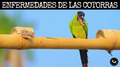15 Ideas De Cotorras Cotorro Aves Loros
