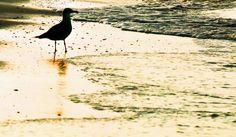 Sanibel Islands Pointe Santo - Sandra W - Picasa Web Albums