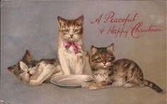 PEACEFUL CHRISTMAS CATS EARLY VINTAGE WK
