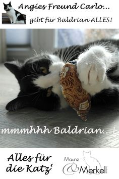 """Katzen lieben #Baldrian! Wo wir Zweibeiner eher die Nase rümpfen, sind #Katzen ganz aus dem Häuschen.  Unsere Baldrian-Spielkissen sind gefüllt getrocknetem, gehäkselten Baldrian in Bio-Qualität und natürlich mit ein bisschen Watte.  Ist der Duft irgendwann verflogen, nimmt man das trockne Kissen und legt es für ein paar Tage luftdicht verschlossen weg. Holt man es wieder hervor, verströmen die Kräuter wieder ihren """"Duft"""". Animals, One Day, Couple, Games, Cushion, Animales, Animaux, Animal, Animais"""