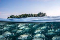 Sipadan island and its characteristic underwater world. N... by Mehmet Salih Bilal