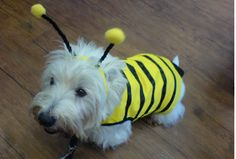 West Highland Terrier Wednesday: the early Halloween costume edition | Scottish Terrier and Dog Newshttp://www.scottishterriernews.com/2009/10/west-highland-terrier-wednesday_20.html