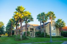 Live it up with palm trees and a pool in Orlando! This 4BD/4BA cash-only property is available on Auction.com! #realestate