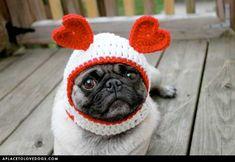 The Love Pug!