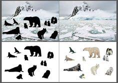 """"""" animals in their natural environment Polar Animals, Live Animals, Fun Facts About Animals, Animal Facts, Animal Activities, Winter Activities, Book Activities, Igloo Craft, Polo Norte"""
