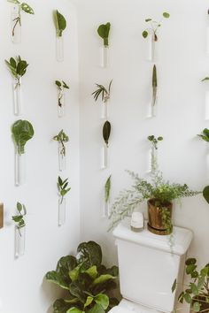 my scandinavian home: 5 DIY Projects to Try During Quarantine Plant Cuttings, Propagation, Plant Wall, Plant Decor, Diy Chalk Paint Recipe, Decoration Plante, Bedroom Plants, Scandinavian Home, How To Antique Wood
