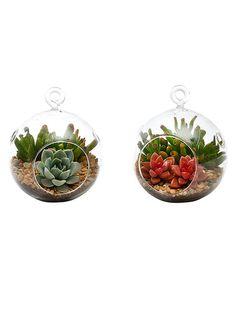 Live La Jolla Succulent Terrarium Duo Kit by Source Succulents at Gilt