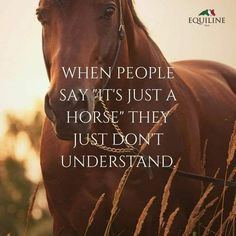 The most important role of equestrian clothing is for security Although horses can be trained they can be unforeseeable when provoked. Riders are susceptible while riding and handling horses, espec… Cute Horse Quotes, Inspirational Horse Quotes, Horse Riding Quotes, Cowboy Quotes, Cowgirl Quote, Animal Quotes, Horse Sayings, Horse Girl Quotes, Horse Poems