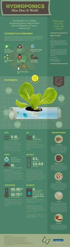 Hydroponics infographic - all about how it works.