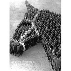 Soldiers pay tribute to millions of horses who died during the First World War