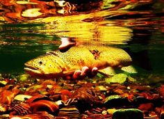 A striking underwater photograph of a fish in shallow waters deep in the Bob Marshall Wilderness won this year's outdoors photo contest.    Photographer Michael Reavis of Essex captured the picture near the remote backcountry station of Big Prairie, where he works in the summers clearing trails and a little packing with mules.