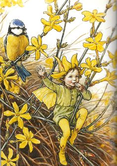 L'Elfe des Jasmins d'Hiver - By Cicely Mary Barker