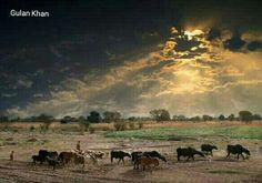 Beauty of Punjab rural areas of Punjab Pakistan