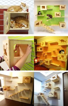 Catswall.  Catswall is a modular aluminum wall hanger system. DIY assembly.  The grid system of Catswall allows you to add different extensions to it, the Catsbox, Catspassage, Catsladder, and Catstair.