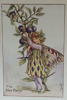 Flower Fairy Sloe CICELY MARY BARKER by TitaniaVintagePrints. A very striking Flower Fairy. Sloes impart a lovely flavour to gin! It's a great autumnl activitiy to collect them. #sloegin