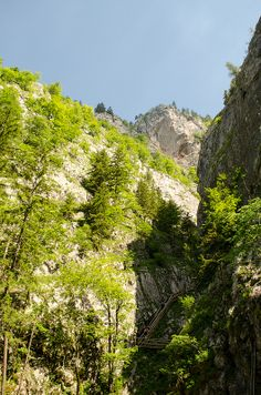 Image Flora, Mountains, Nature, Photography, Travel, Image, Voyage, Viajes, Traveling