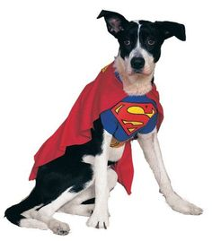 Rubies Costume DC Heroes and Villains Collection Pet Costume, Superman, Medium >>> Details can be found by clicking on the image.