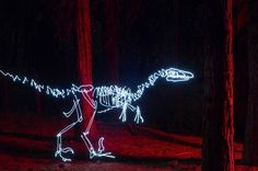The Secret Life Of Skeletons Made Of Light