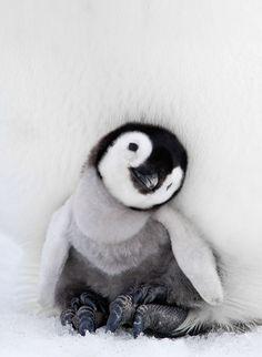 18 photos sublimes dans l'intimité du manchot, un animal qui gagne à être connu | Buzzly