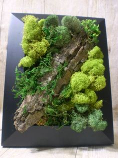 Preserved Moss Wall Art - Mothers Day - Nature Wall Art - Moss Art Painting - Rustic Home Decor - Preserved Living Wall - Vertical Garden by TheNorthSides on Etsy Frame Wall Decor, Frames On Wall, Framed Wall Art, Succulent Wall Art, Plant Wall, Vertical Planting, Vertical Gardens, Moss Plant, Moss Wall Art