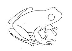 How To Draw A Frog - Draw Central