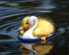 ducky on an inflatable - baby ducks warm my heart Cute Baby Animals, Animals And Pets, Funny Animals, Beautiful Birds, Animals Beautiful, Animal Pictures, Cute Pictures, Sunday Pictures, Sunday Images