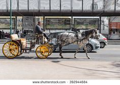 Single gray horse pulling yellow and black carriage with driver on street next to cars on busy street in Malaga Spain Gray Horse, Malaga Spain, Busy Street, Places In Europe, Horse Drawn, Spain Travel, Antique Cars, Photo Editing, Royalty Free Stock Photos