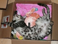 A nap with toys.   :)