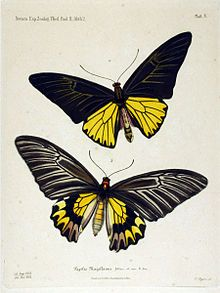 The Biodiversity Heritage Library works collaboratively to make biodiversity literature openly available to the world as part of a global biodiversity community. Beautiful Butterflies, Amazing Flowers, Nice Flower, Best Flower Pictures, Butterfly Species, Vintage Crafts, Zoology, Botanical Prints, Insects
