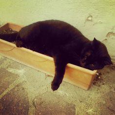 My black cat!!!